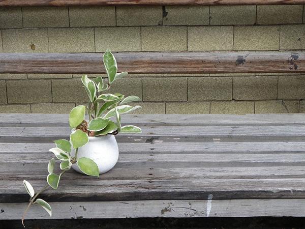 観葉植物のことを30日間毎日考え続けてみた